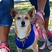Adopt A Pet :: Jolanda - Thousand Oaks, CA