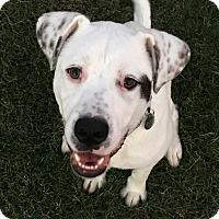Adopt A Pet :: Dallas - Homewood, AL