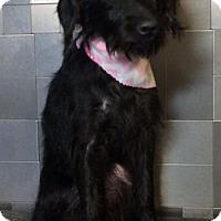 Adopt A Pet :: Elga - McKinney, TX