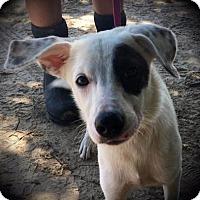 Adopt A Pet :: Boles - Quinlan, TX