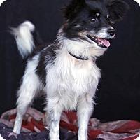 Adopt A Pet :: Rocco - SAN PEDRO, CA