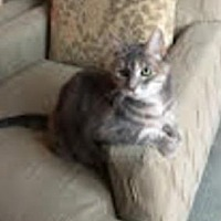 Adopt A Pet :: PLEASE FOSTER CHLOE! - Washington, DC