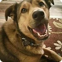 Adopt A Pet :: Buddy - Duchess, AB