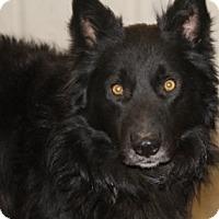 Adopt A Pet :: Bear - Avon, NY