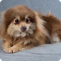Adopt A Pet :: Halsey - Colorado Springs, CO