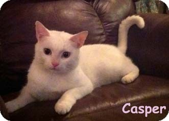 Domestic Shorthair Cat for adoption in Merrifield, Virginia - Casper
