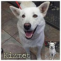 Adopt A Pet :: Kizmet - Garden City, MI