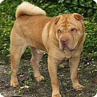 Adopt A Pet :: Nikko - Gainesville, FL