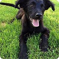 Adopt A Pet :: Tatum - Richmond, VA