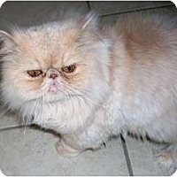 Adopt A Pet :: Kinsey - Columbus, OH