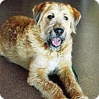 Adopt A Pet :: Thor - Cheyenne, WY