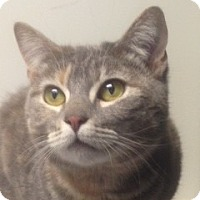 Adopt A Pet :: Sassy - North Haven, CT