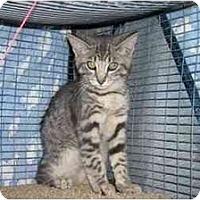 Adopt A Pet :: Draco - Davis, CA