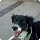 Adopt A Pet :: Ravishing Ramon
