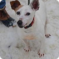 Adopt A Pet :: Madeline - Whitestone, NY