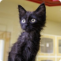Adopt A Pet :: Branson - Mission Viejo, CA