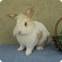 Adopt A Pet :: Campbell - Bonita, CA