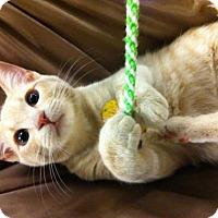 Adopt A Pet :: Ella - Watkinsville, GA