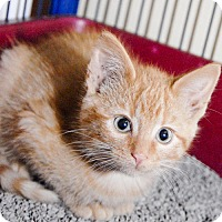 Adopt A Pet :: Jerrick - Grand Ledge, MI