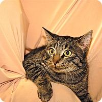 Adopt A Pet :: Dijon - Red Wing, MN