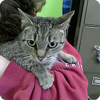 Adopt A Pet :: Tamina - Trevose, PA