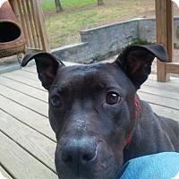 Adopt A Pet :: JAKKU - Kimberton, PA