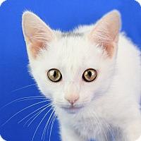 Adopt A Pet :: Moonlight - Carencro, LA