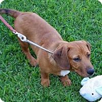 Adopt A Pet :: Oakley - Charleston, SC