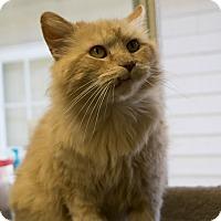 Adopt A Pet :: Prince - Fremont, NE