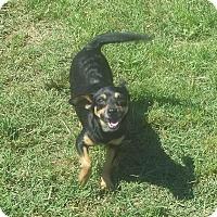 Adopt A Pet :: Maggie meet me 7/8 - Manchester, CT