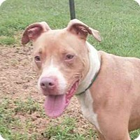 Adopt A Pet :: Roxy - Paris, IL
