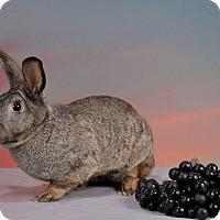 Adopt A Pet :: Vera - Marietta, GA