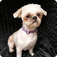 Adopt A Pet :: Jasper Turner - Urbana, OH