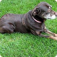 Adopt A Pet :: Hattie - Geneseo, IL