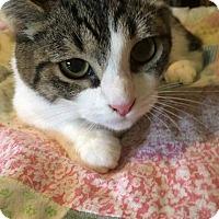 Adopt A Pet :: Wynken - Putnam, CT