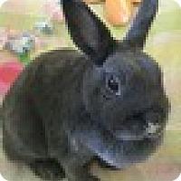 Adopt A Pet :: chi Chi - Paramount, CA
