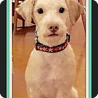 Adopt A Pet :: Jasper - West Los Angeles, CA