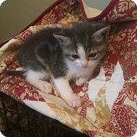 Adopt A Pet :: Sadie - Sparta, NJ