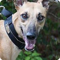 Adopt A Pet :: Peggy - Nashville, TN