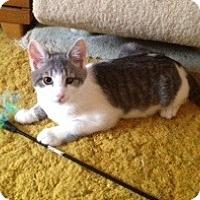 Adopt A Pet :: Larry - Colmar, PA