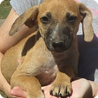 Adopt A Pet :: Buster Brown - Westport, CT