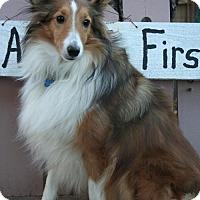 Adopt A Pet :: Korkie - Sioux Falls, SD
