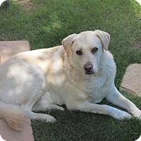Adopt A Pet :: Buffer-Riverside Listing - Fullerton, CA