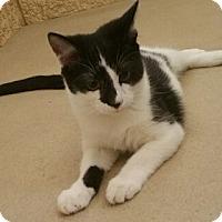 Adopt A Pet :: Rogelio - Chula Vista, CA