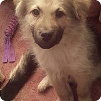 Adopt A Pet :: HARRY - Winnipeg, MB