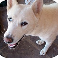 Adopt A Pet :: Siku - Santa Fe, NM