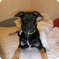 Adopt A Pet :: Hannah - Hancock, MI