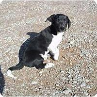 Adopt A Pet :: Oreo - Adamsville, TN