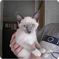 Adopt A Pet :: Nagi - Mesa, AZ