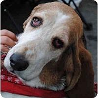 Adopt A Pet :: Tess - Phoenix, AZ